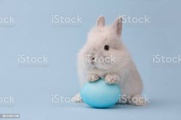 Easter bunny with egg on blue background picture id924464156?b=1&k=6&m=924464156&s=612x612&h= udtahfwd8xj5tixsysvtanfejro3syfd nwhhkawwk=