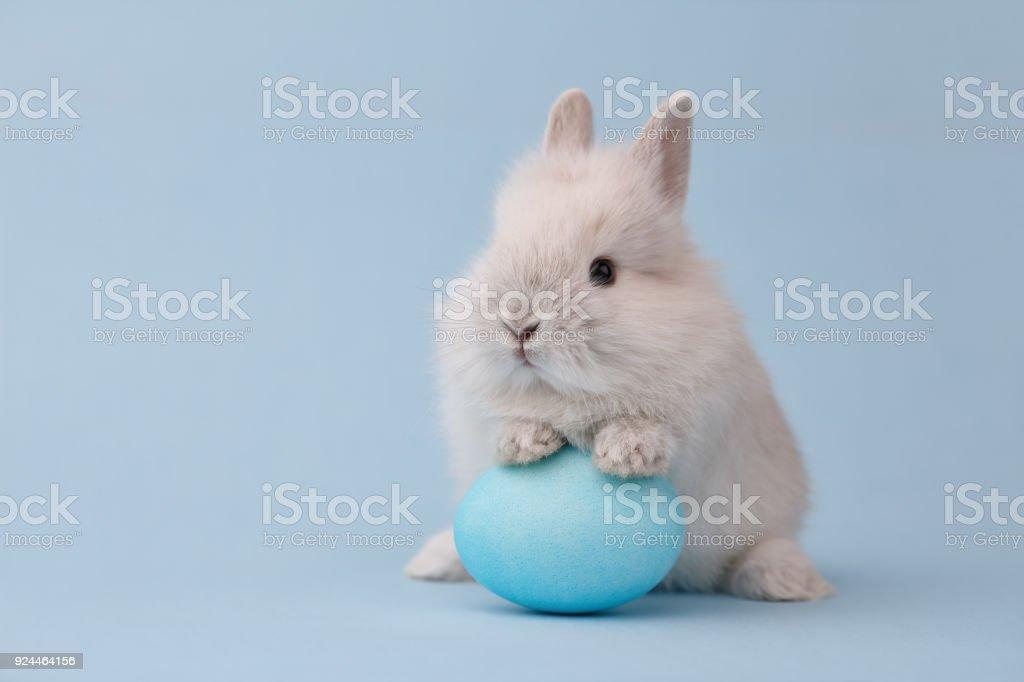 Conejito de Pascua con huevo sobre fondo azul - foto de stock