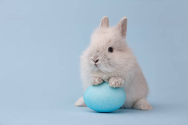 easter bunny with egg on blue background - easter imagens e fotografias de stock
