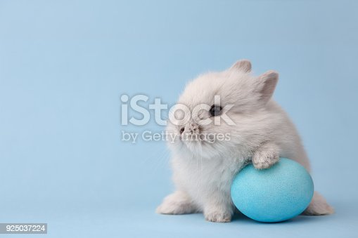 istock Easter bunny with egg on blue background 925037224