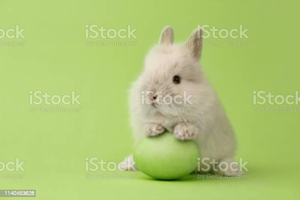 Easter bunny with egg on green background picture id1140453628?b=1&k=6&m=1140453628&s=612x612&h=kt6wj0liihtnutkc8youq3xdbsxtdknrll8xtiy8kkg=