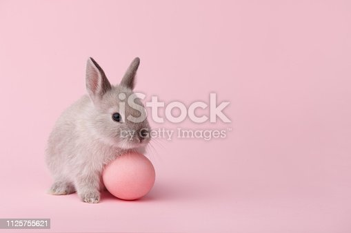 Easter bunny rabbit with painted egg on pink background. Easter holiday concept.