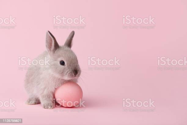 Easter bunny with egg on pink background picture id1125755621?b=1&k=6&m=1125755621&s=612x612&h=ex5nm7fvca1x8pouy4aiz1edvh5t92noix32e1q9ae0=