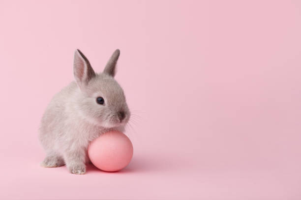 easter bunny with egg on pink background - easter bunny stock photos and pictures