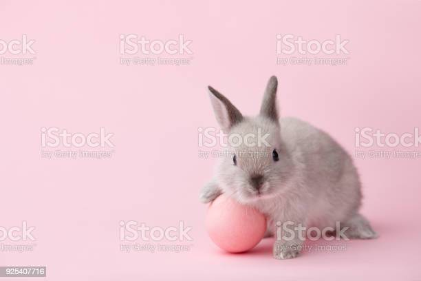 Easter bunny with egg on pink background picture id925407716?b=1&k=6&m=925407716&s=612x612&h=wqnp0scrd3bnvmupqojvb64opj2zpmf1tc23o nv4eu=