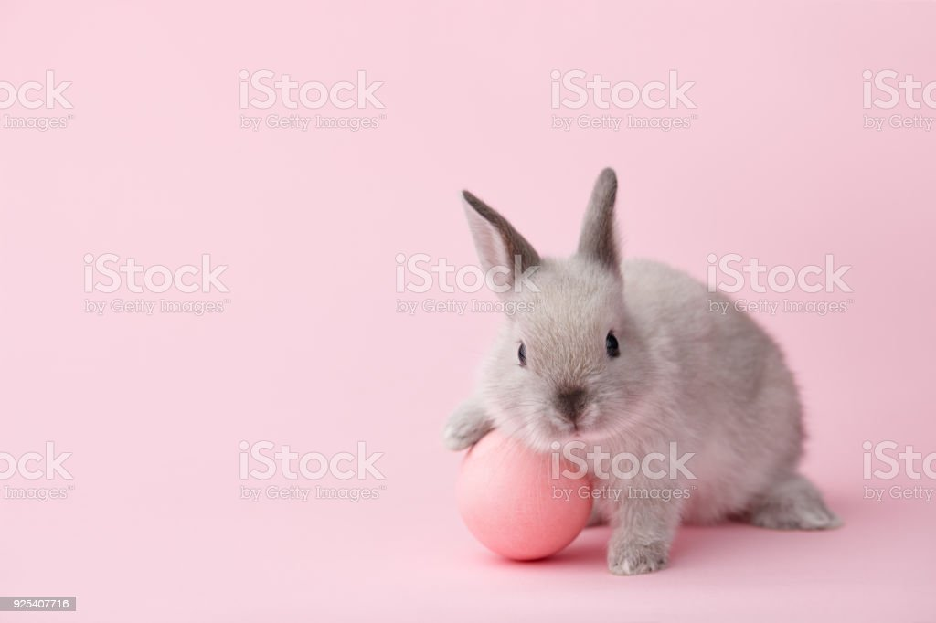 Easter bunny with egg on pink background stock photo