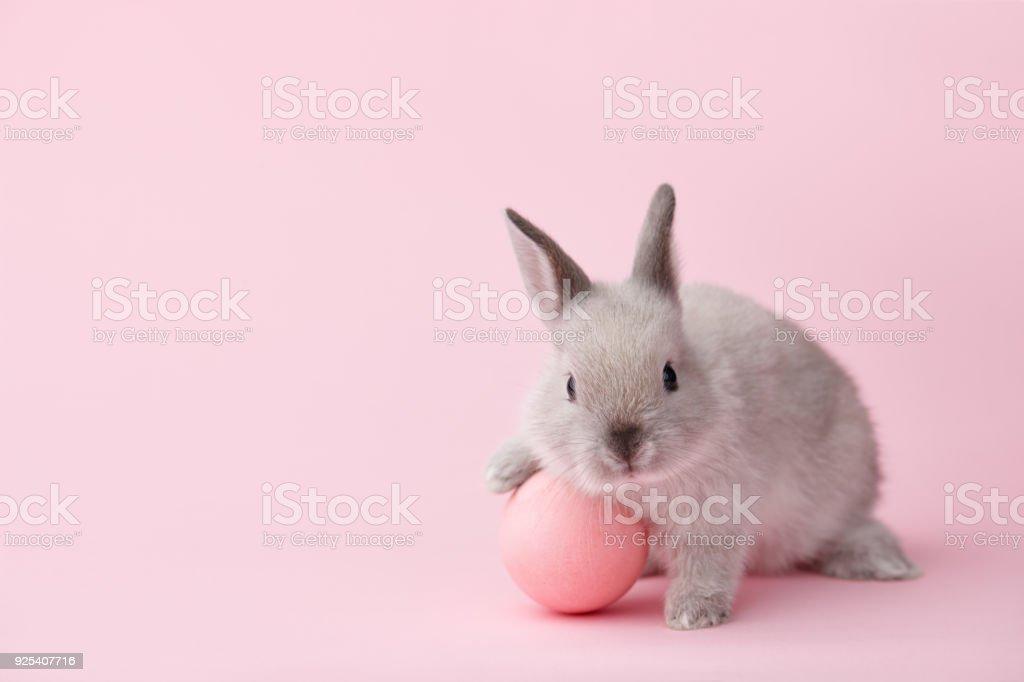 Osterhase mit Ei auf rosa Hintergrund – Foto