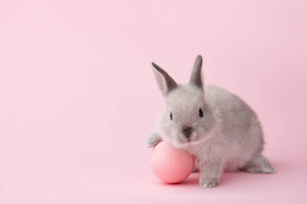 easter bunny with egg on pink background - easter imagens e fotografias de stock