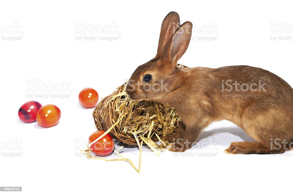 Easter bunny with Eggs in basket royalty-free stock photo