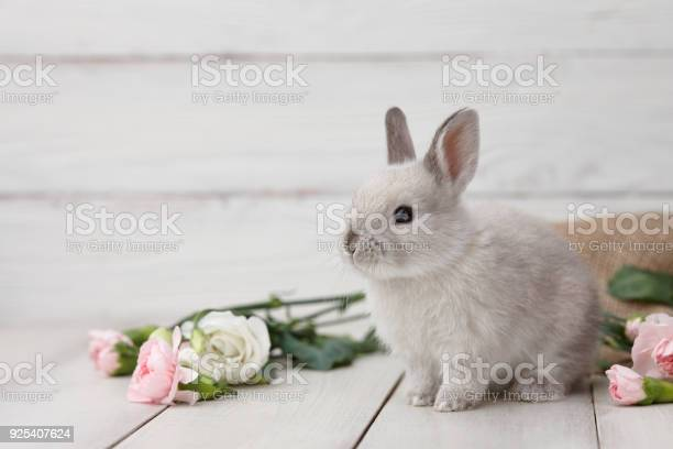 Easter bunny with flowers on white planks picture id925407624?b=1&k=6&m=925407624&s=612x612&h=hfno8rbss9gacuqqkykikcd2bqjapumkofrqvppp0ua=