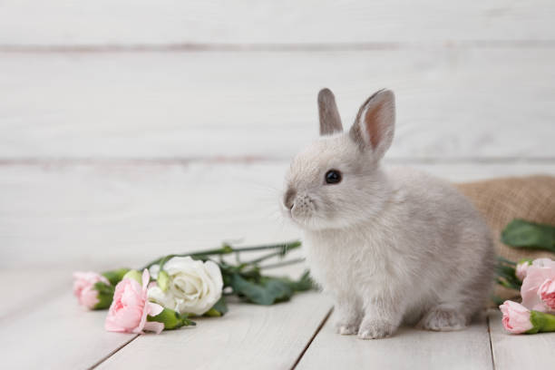Easter bunny with flowers on white planks stock photo