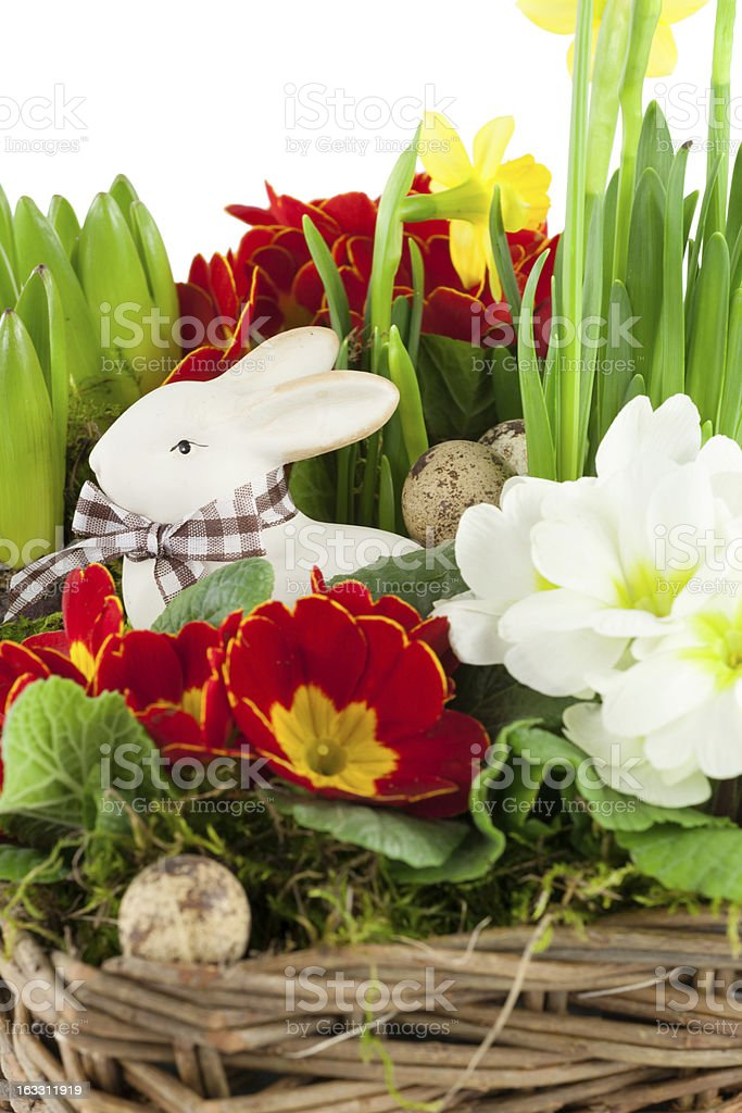 Easter bunny with spring flowers royalty-free stock photo
