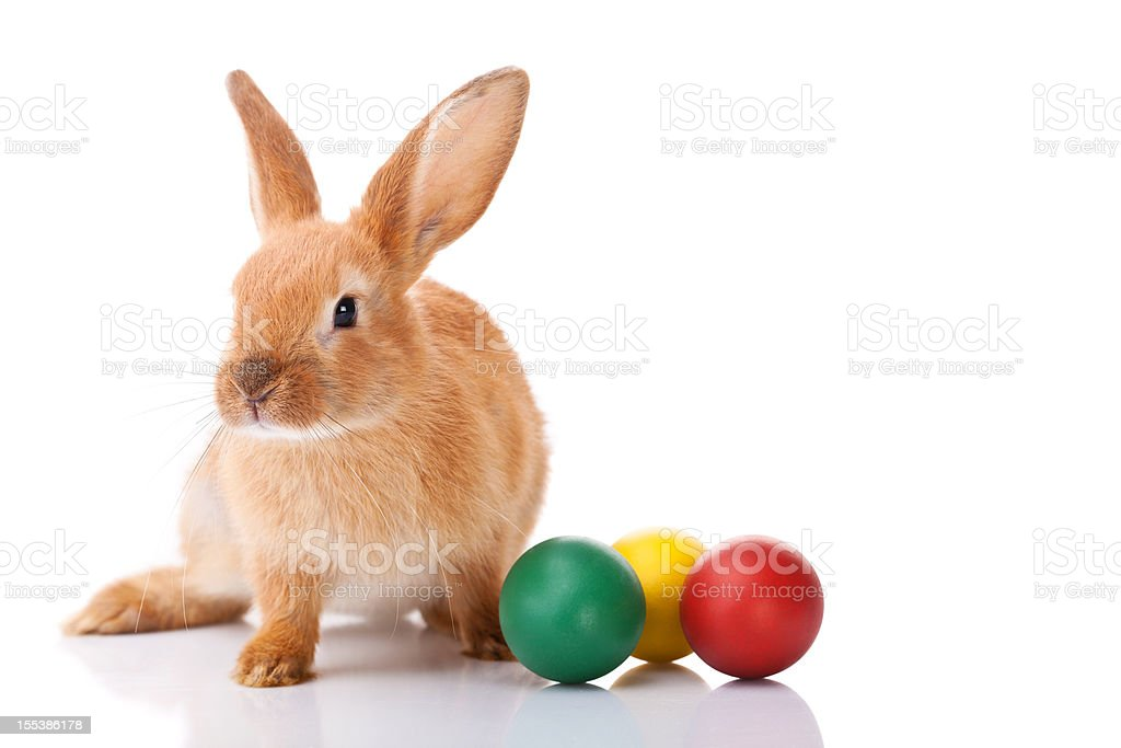 Easter bunny with three Easter eggs stock photo