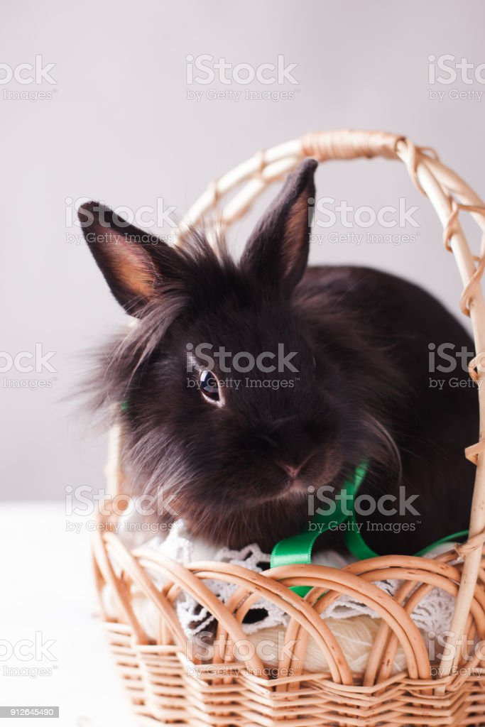 Easter Card On A Clean Gray Background A Rabbit Is Sitting In A