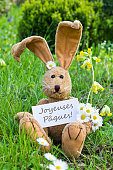 french easter card with Easter bunny and daisies