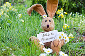 spanish easter card with Easter bunny and daisies