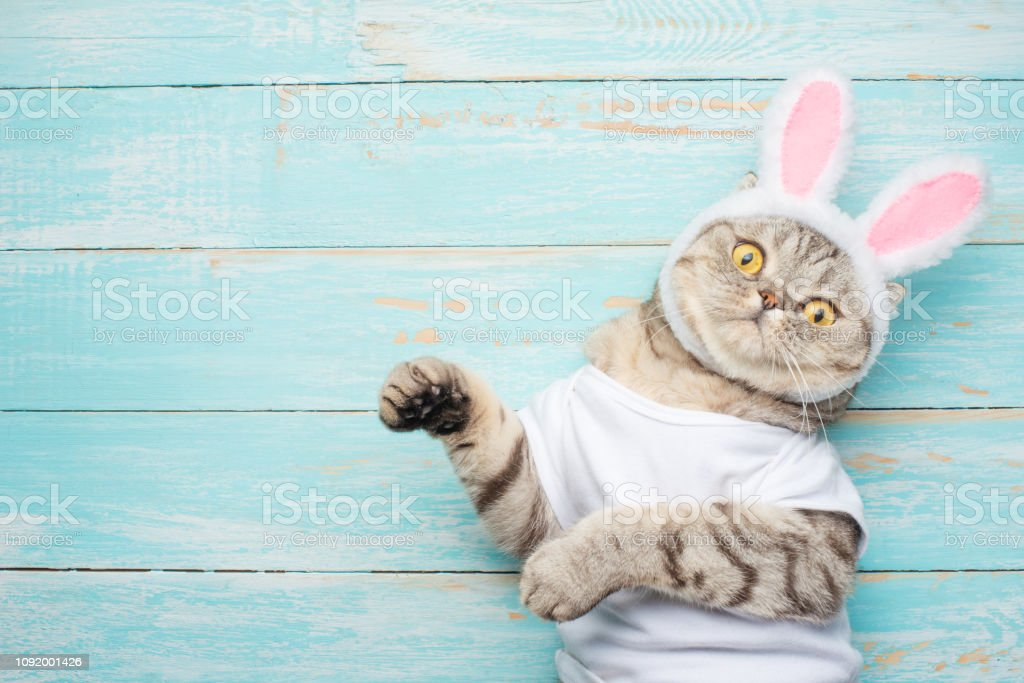Easter Cat With Rabbit Ears Banner Easter Screensaver For Design Stock Photo Download Image Now Istock