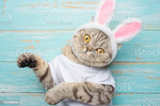 Easter cat with rabbit ears banner easter screensaver for design picture id1093688030?b=1&k=6&m=1093688030&s=612x612&h=x9owjt3axs kkf2oyc6ix7wk sf1ckfzso5 7p2whgy=