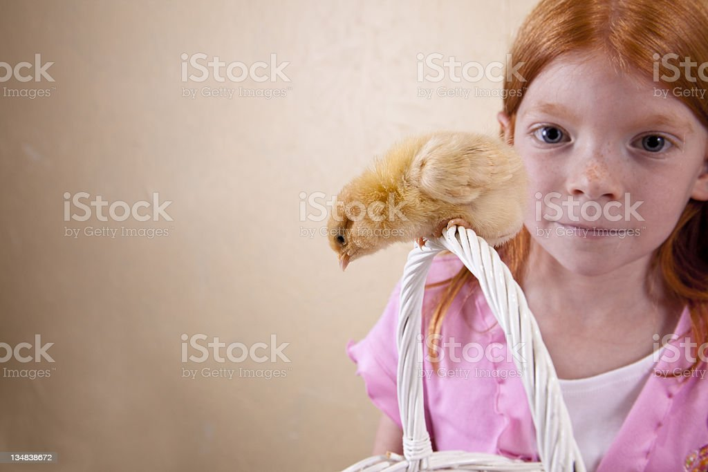 Easter chick on basket royalty-free stock photo