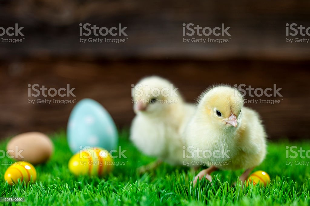 Easter chicken, eggs and decorations stock photo