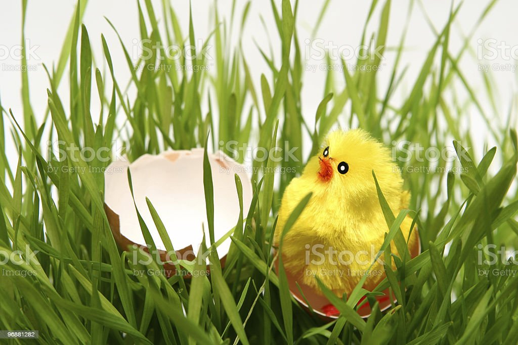 Ostern Huhn Lizenzfreies stock-foto