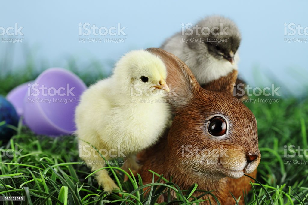 Easter Chicks and Bunny stock photo