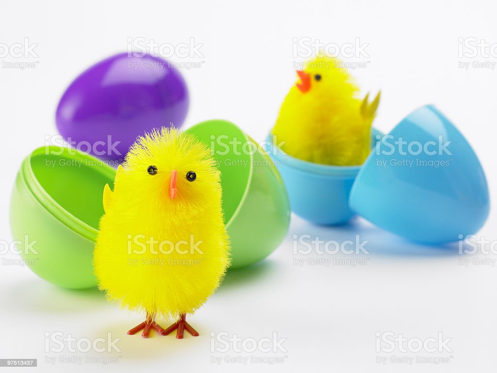 Easter Chicks Hatching Out Of Eggs royalty-free stock photo