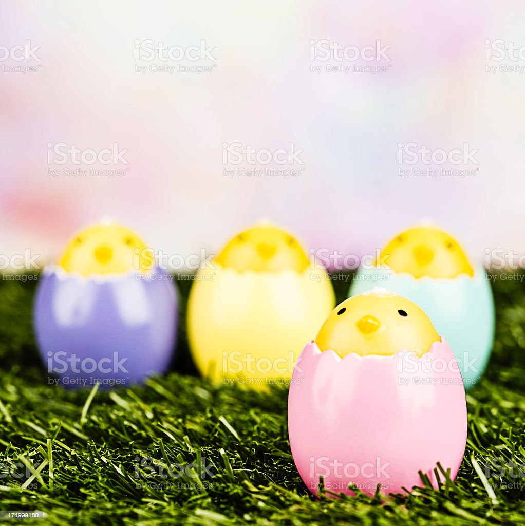 Easter Chicks in Grass royalty-free stock photo