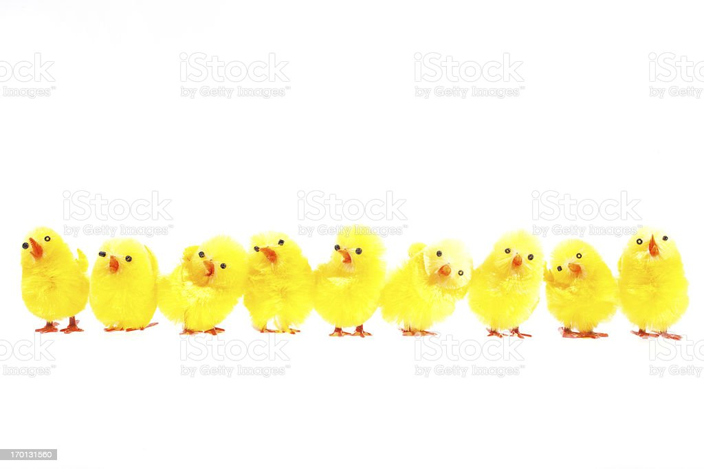 Easter chicks isolated on white stock photo