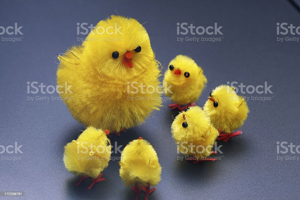Easter Chicks - Lesson from the elder royalty-free stock photo