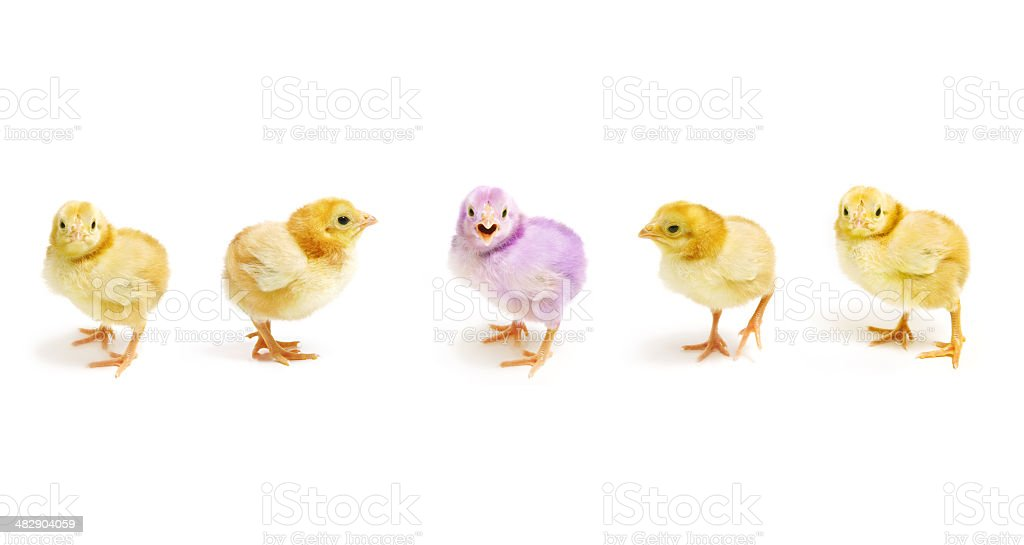 Easter Chicks Parade royalty-free stock photo