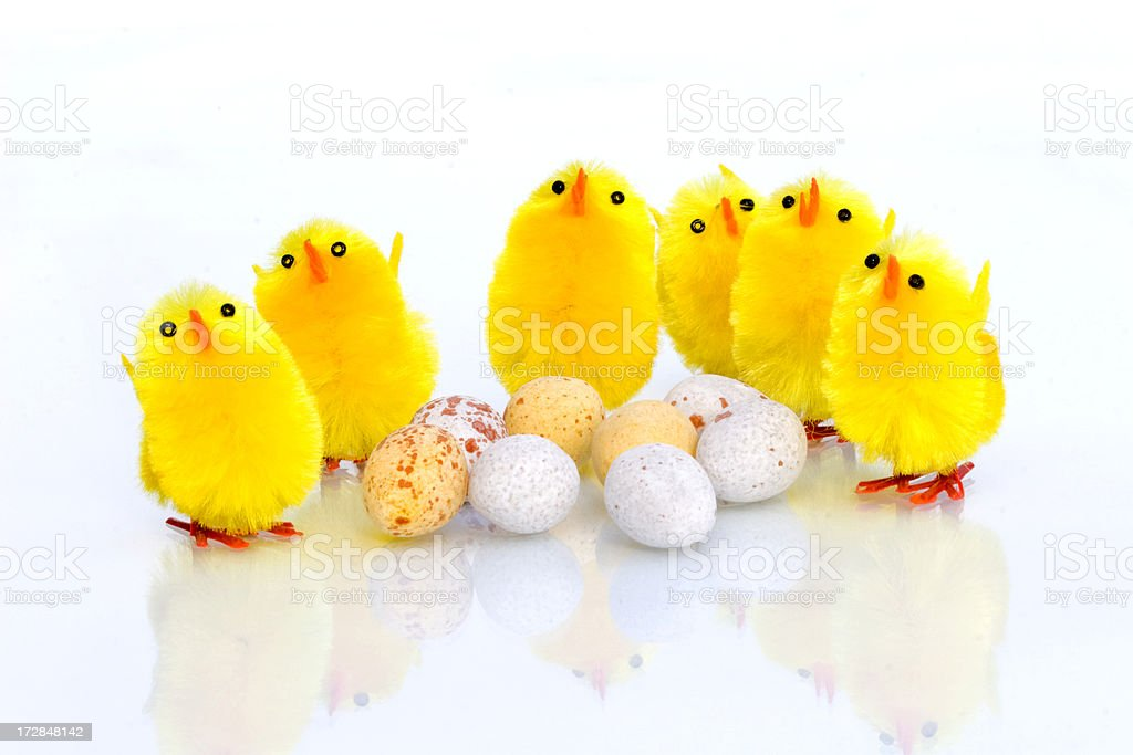 Easter Chicks with Chocolate Eggs royalty-free stock photo