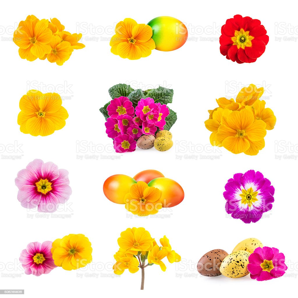 Easter Collection Spring Flowers stock photo