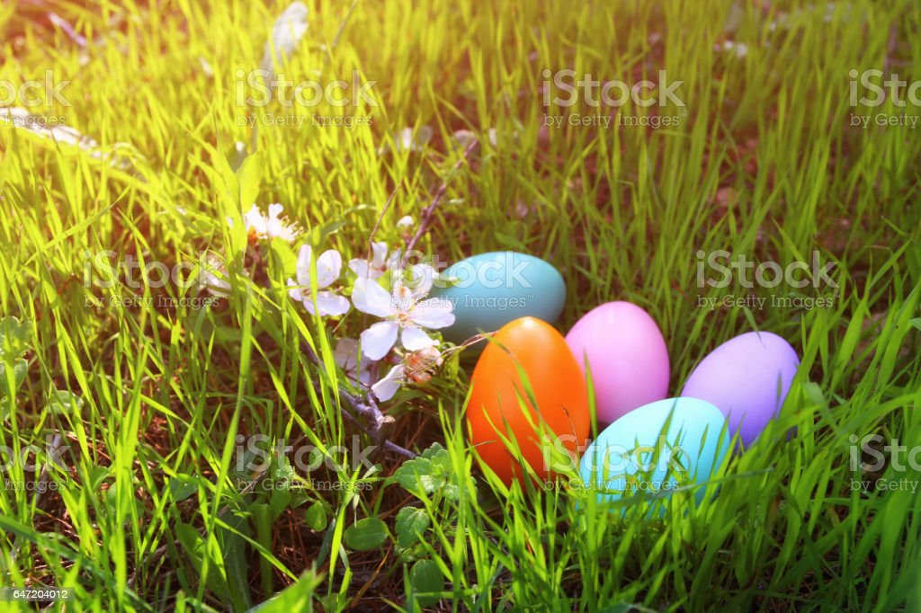 easter colorful eggs on the green grass stock photo