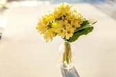 Easter concept. Bouquet of Primrose Primula with yellow flowers in glass vase on white backdrop. Inspirational natural floral spring or summer blooming background. Copy space