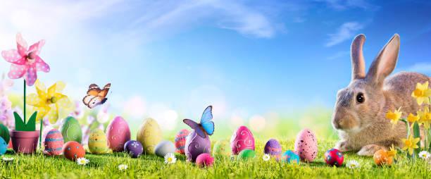 ostern-niedlicher bunny mit eggen in wiese - hase stock-fotos und bilder