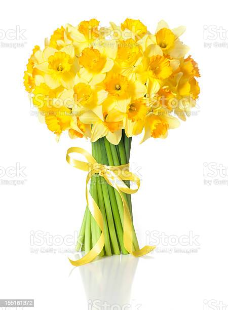 Easter Daffodils Stock Photo - Download Image Now