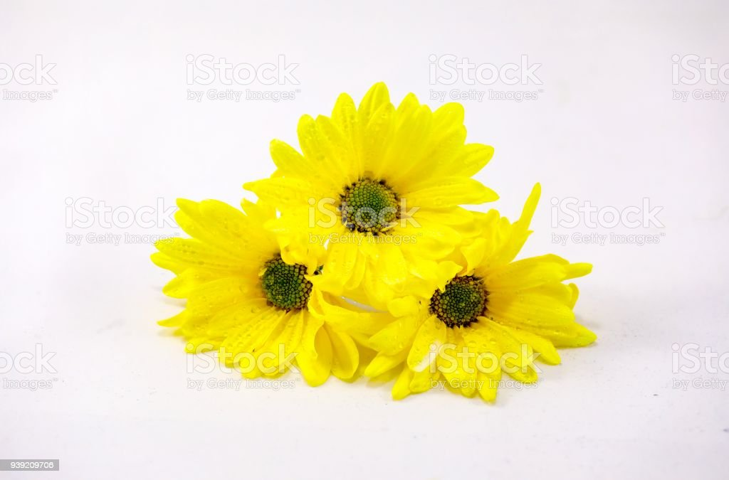 Easter Daisies stock photo