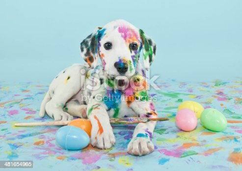 istock Easter Dalmatain Puppy 481654965