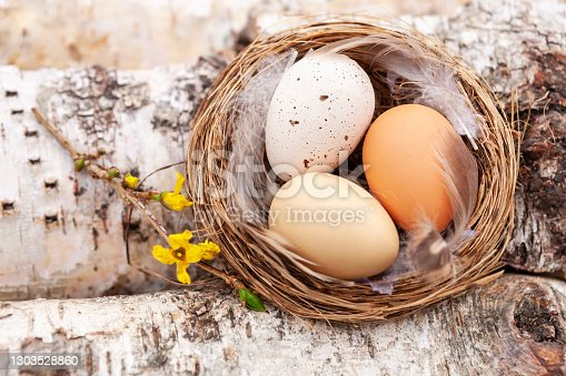 Easter decoration - nest with eggs on birch wooden background