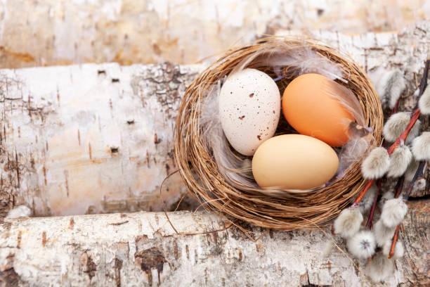 Decoração de Páscoa - ninho com ovos com salgueiro em fundo de madeira de bétula - foto de acervo