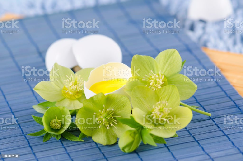 Easter decoration with egg shell and hellebore flower on a stock photo