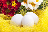 white Easter eggs decorated with ribbon and yellow primroses
