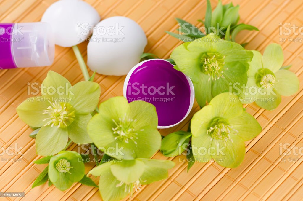 Easter decoration with hellebore and egg shells and magenta tempera stock photo