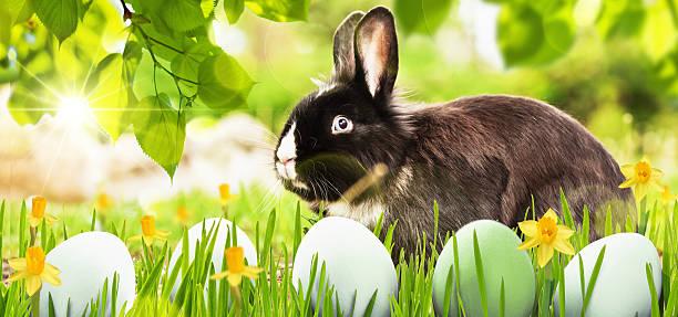 ostern dekoration mit kaninchen - schöne osterbilder stock-fotos und bilder