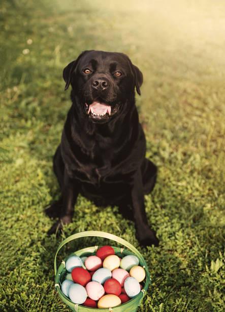 Perro de Pascua sobre hierba - foto de stock
