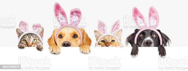 Easter dogs and cats over web banner picture id930286828?b=1&k=6&m=930286828&s=612x612&h=fsss zzpef9onmowm3iyb5r yeb7c9qq2bwykj 7vvc=