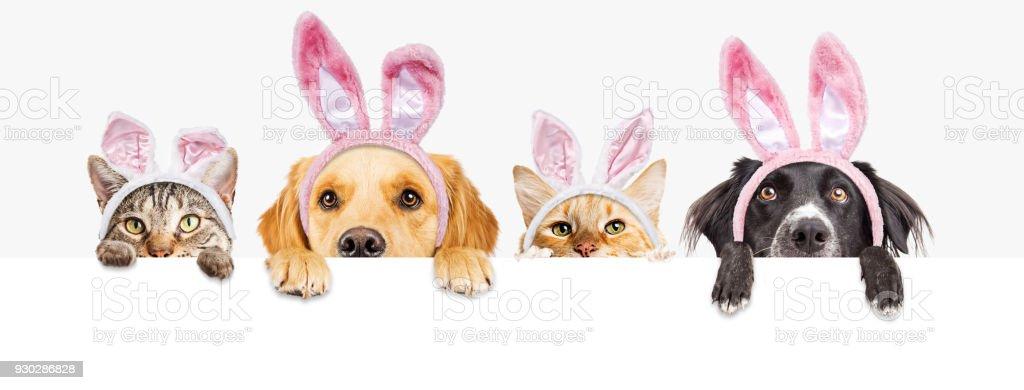 Ostern-Hunde und Katzen über Web-Banner – Foto