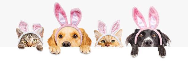 Easter Dogs and Cats Over Web Banner stock photo