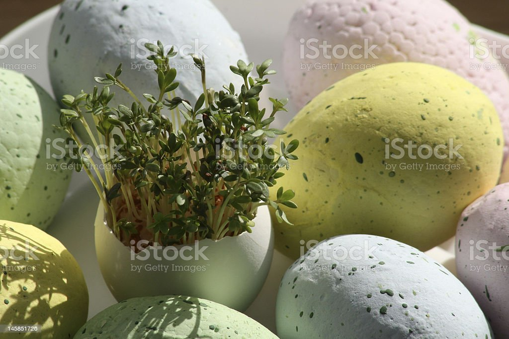 Easter Egg Busket with Watercress royalty-free stock photo